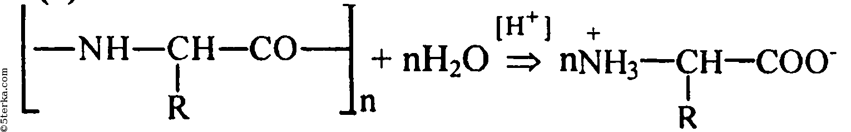 реакции гидролиза белков,